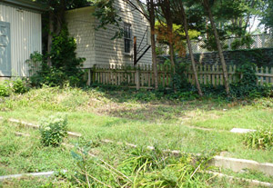 backyard-side2-before