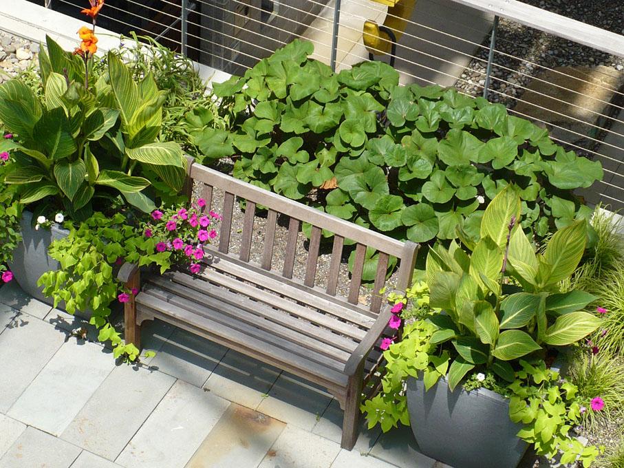 Image of garden
