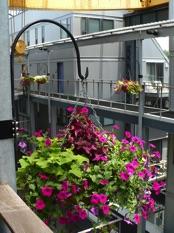Image of plantings